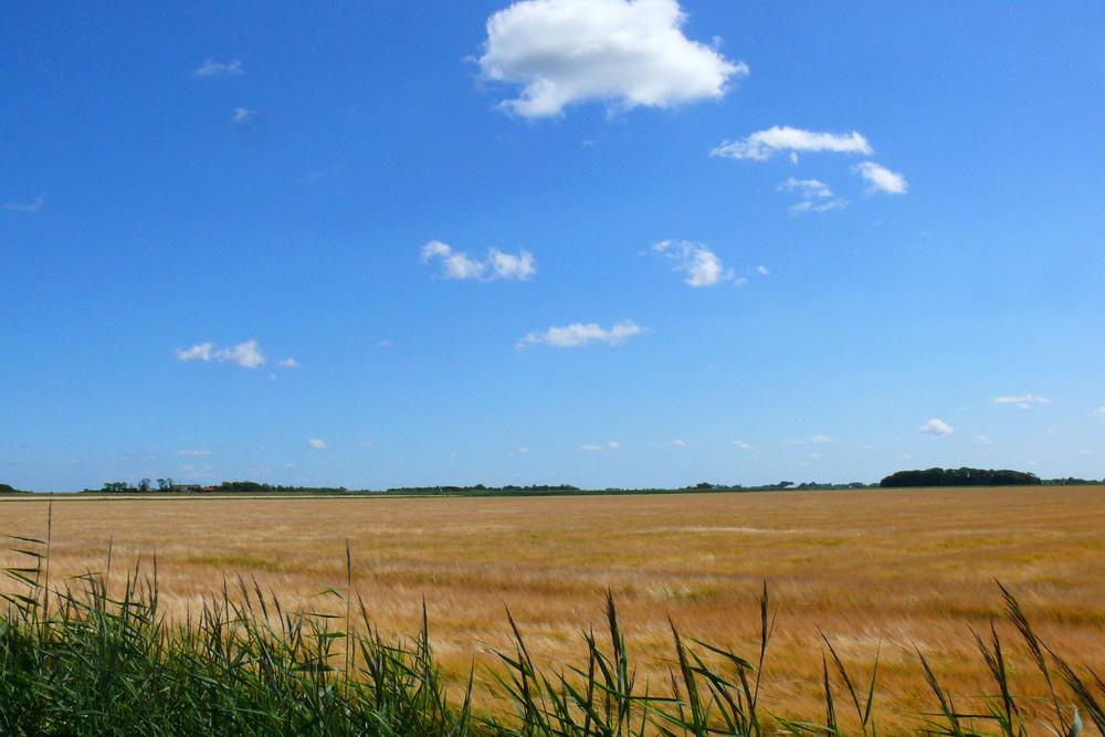 Sommer auf Texel