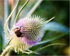 Sommer Biene
