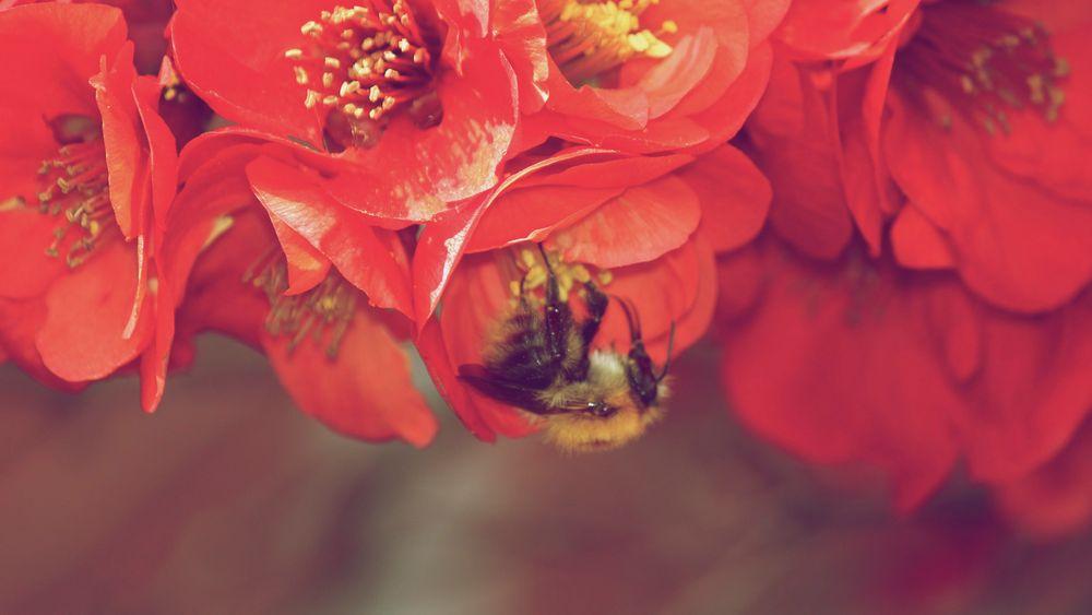 Sommer Blumen von jonaskalkhoff