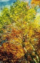Sommer Herbst Part II