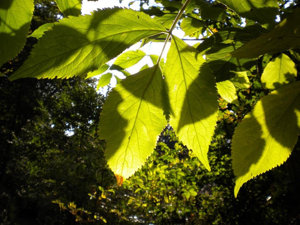 Sommer Herbst Übergang