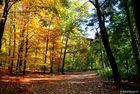 Sommer-Herbst-Übergang