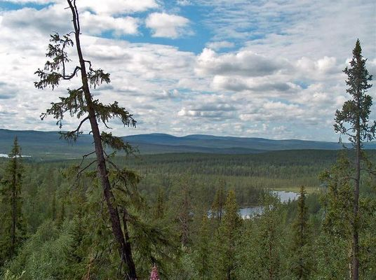 Sommer hinter dem Polarkreis bei Murmansk (Russland)