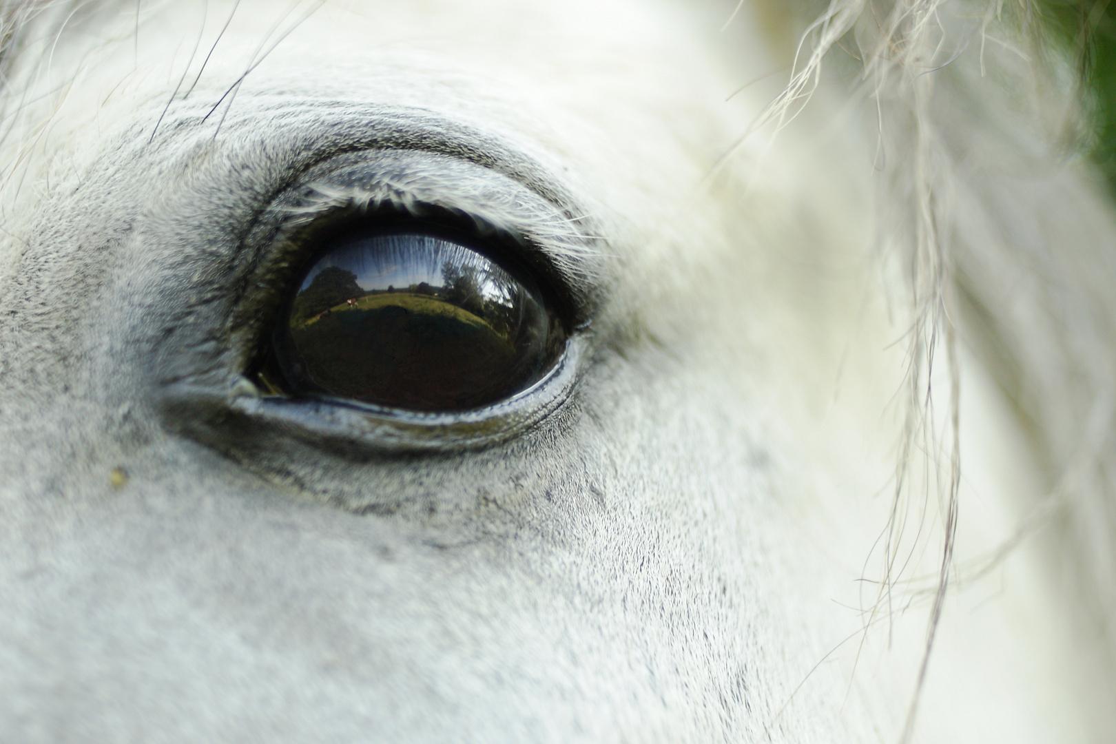"""""""Sommer im Auge eines Pferdes"""""""