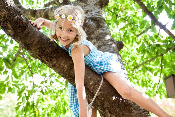 Sommer im Baum