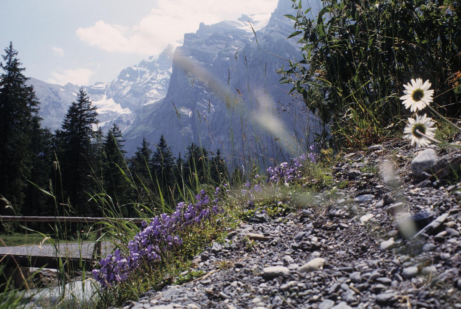 Sommer im Berner Oberland