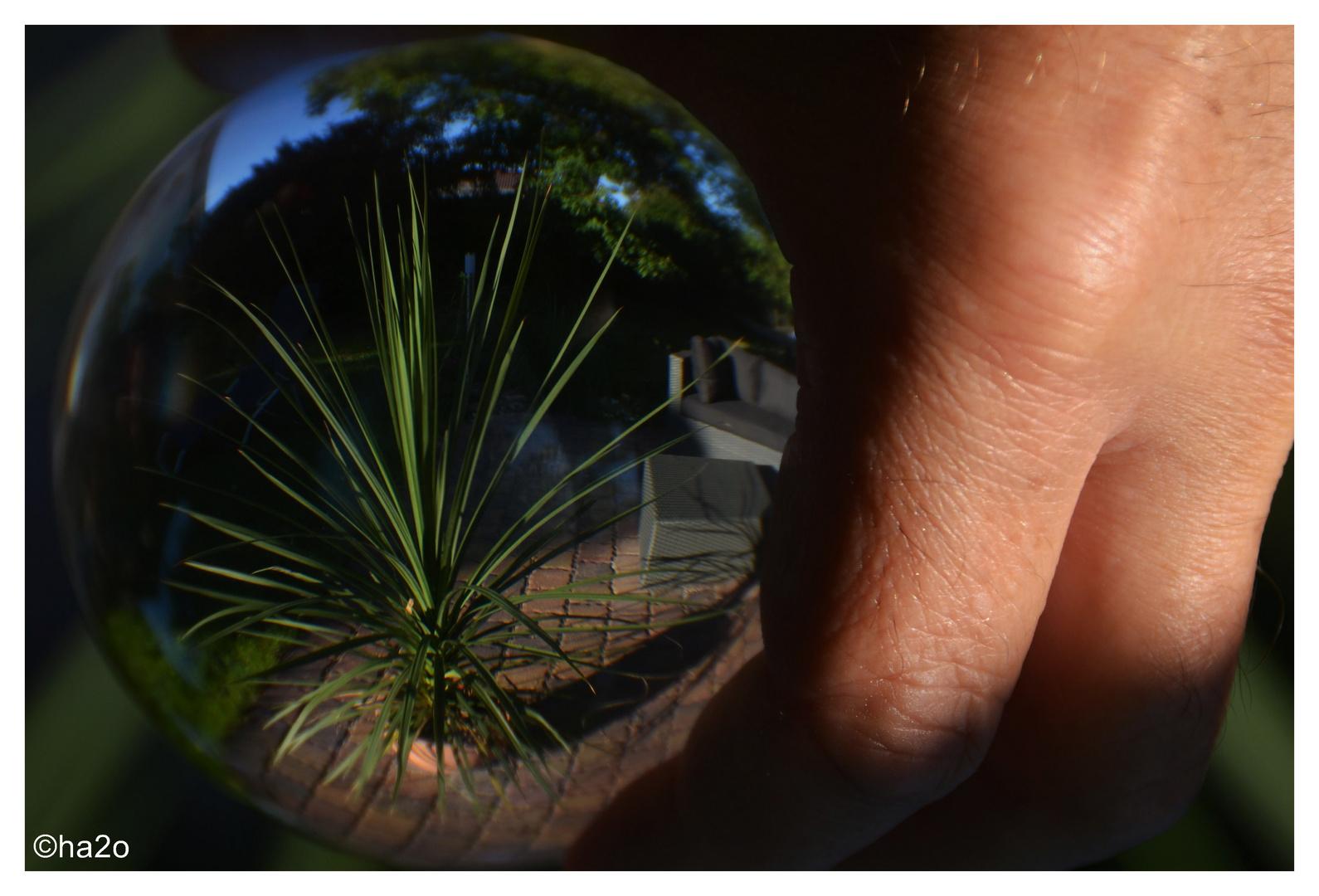 Sommer im Glas... 2013