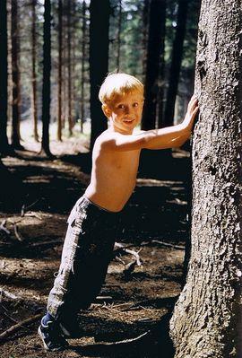 Sommer im Wald