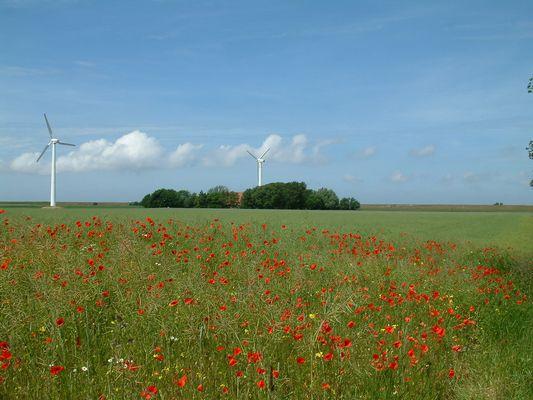 Sommer im Wangerland/LK-Friesland
