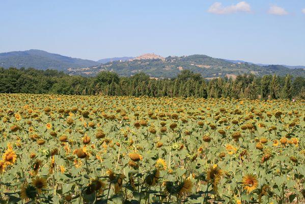 Sommer in der Toscana...