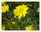 Sommer in Gelb