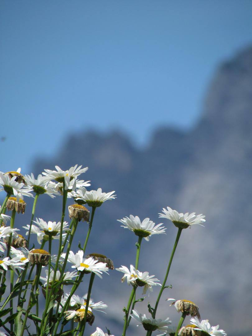 Sommer in Saalfelden