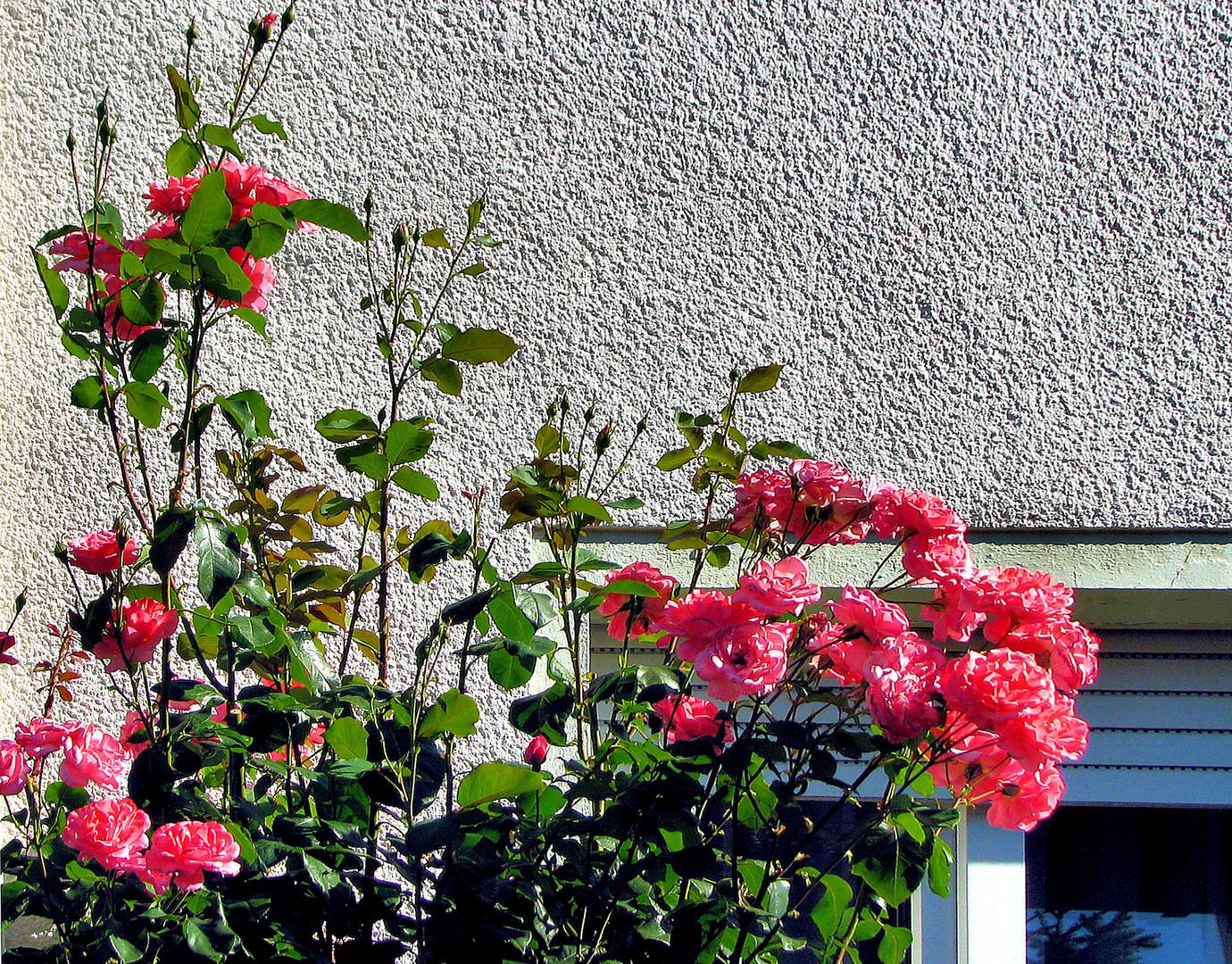 Sommer in unserem Garten 1
