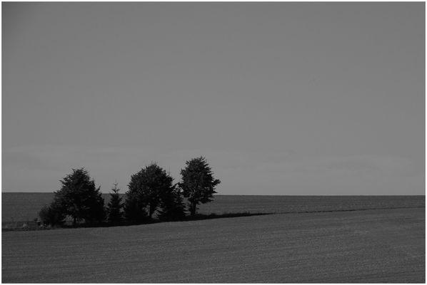 Sommer in Westsachsen (3)