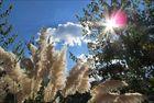 Sommer, Sonne, aber kein Kaktus!