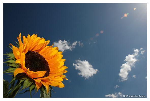 Sommer Sonne Blume ... Glück ... klick
