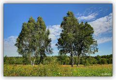Sommer, Sonne, Syrauer Heide...! ;-)