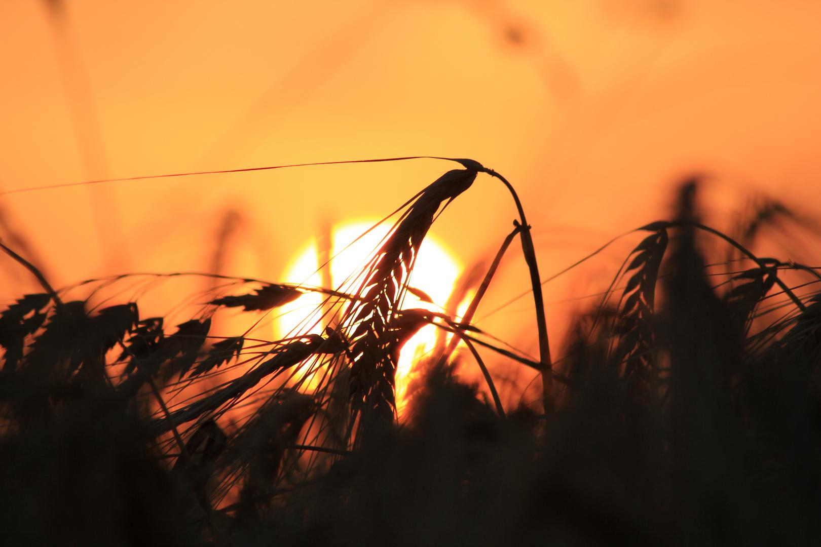 Sommer Sonnenuntergang II