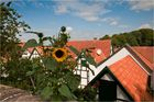 Sommer über den Dächern ...