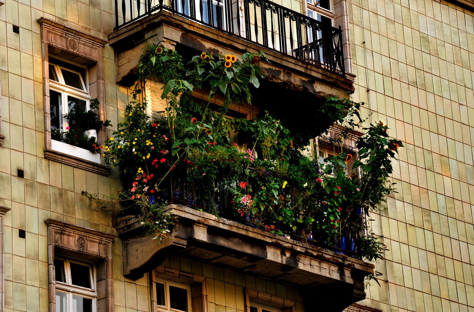 Sommer vom Balkon