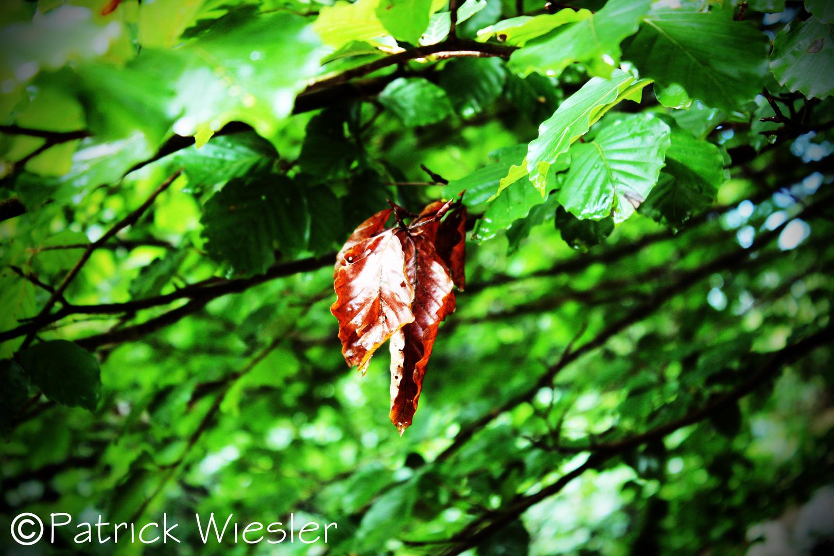 Sommerblätter