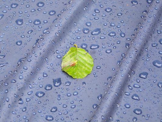 Sommerblatt auf Regenschutz