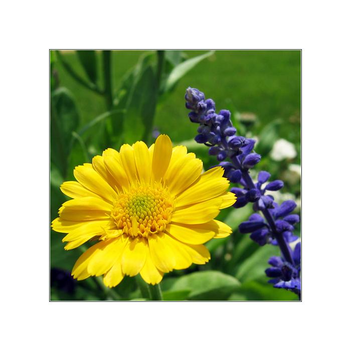 Sommerblüte I