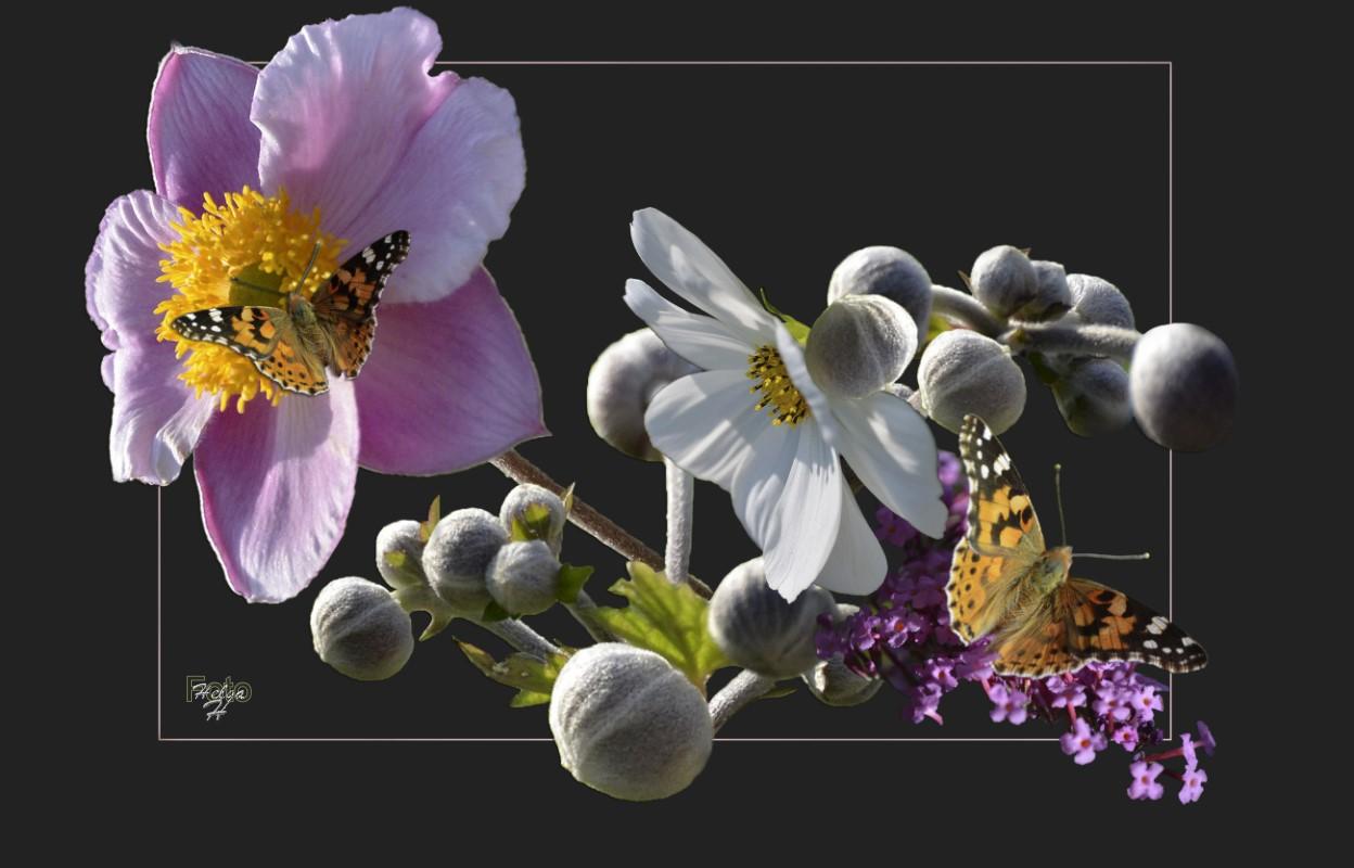 Sommerblüten - Collage