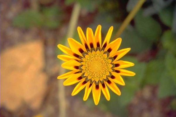 Sommerblume 2001