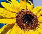 Sommerblume = Sommer