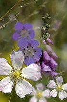 Sommerblumen 2