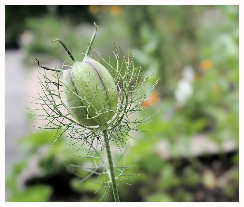 Sommerblumen (3)