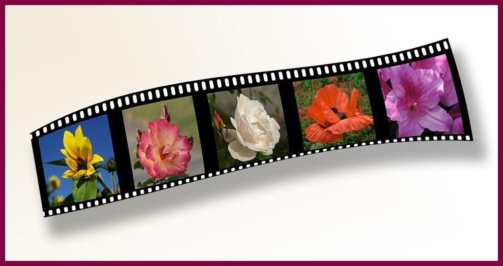- Sommerblumen -