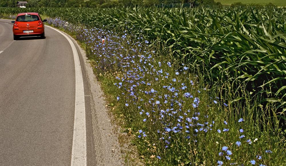 Sommerblumen am Straßenrand