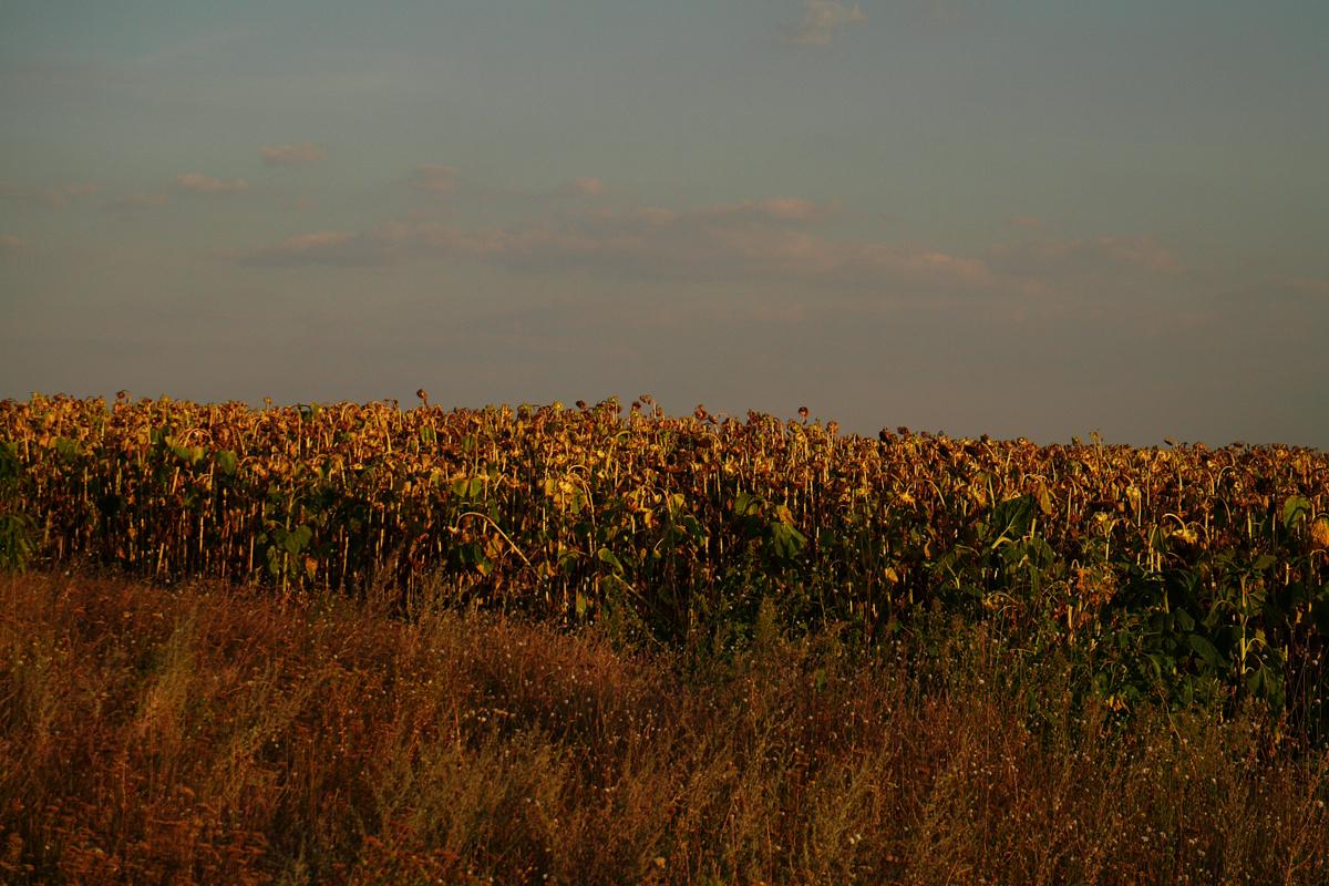Sommerduft mit ner Note Herbst