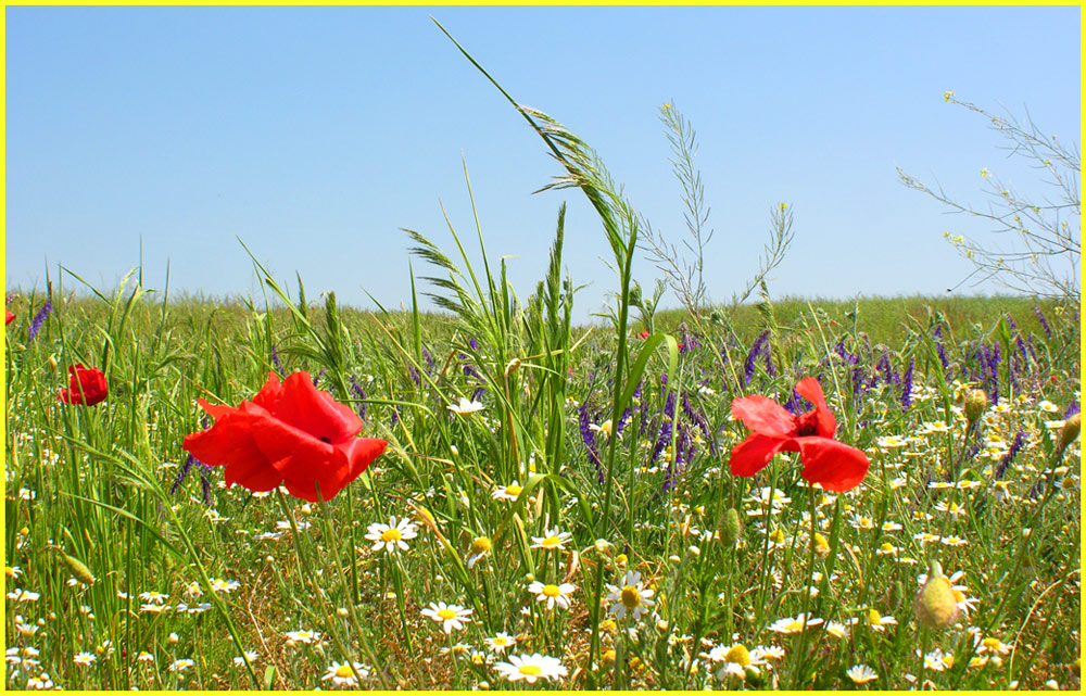 Sommerfarbenblumenwiese