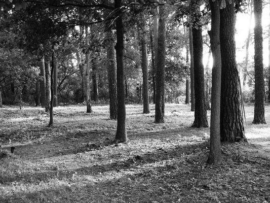 Sommerfeld Friedhof der Lungenheilanstalt