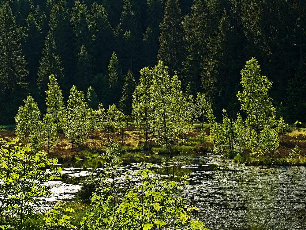 Sommerfrische am Buhlbachsee