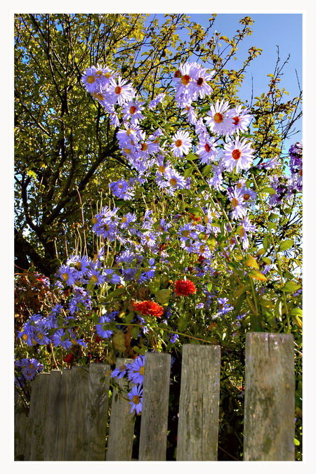 Sommergarten (...wenn es doch bald wieder soweit wäre...)