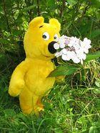 Sommergrüße vom gelben Bär