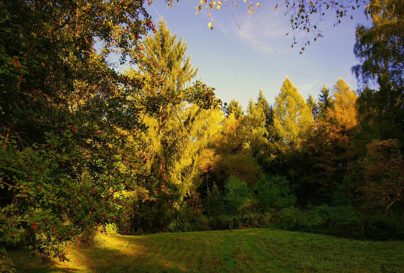 """Sommerhang"" im Herbst"