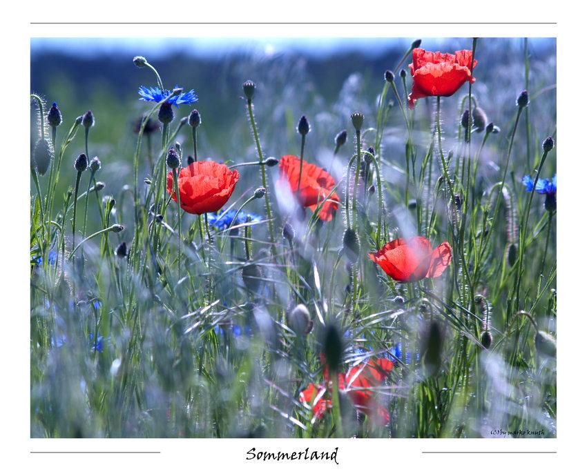 Sommerland ...