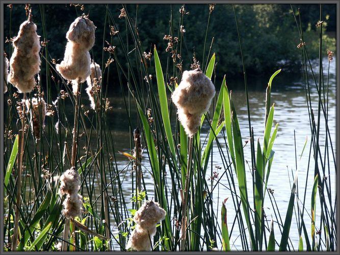 sommerlicher Abend am Teich...