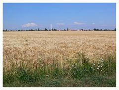 Sommerliches Feld
