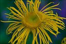 Sommermelodie by 73-Photography
