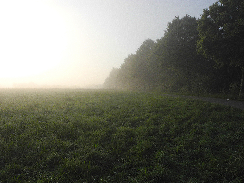 Sommermorgen