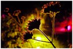 Sommernacht in der Flora II