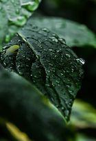 Sommerregen