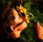 Sommersonnenblume