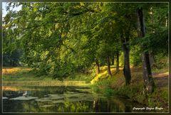 Sommerstimmung am Waldsee